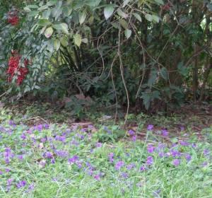 Violet Lawn