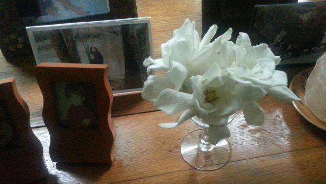 gardenia wine, j. ruth kelly, 2013